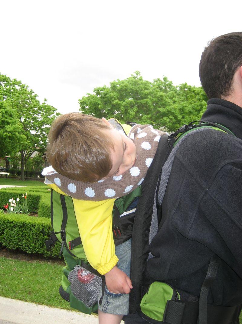 Theo asleep in carrier zoo