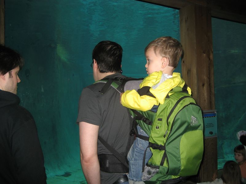 Theo bryan zoo